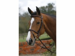 Mark Todd Square Raised Padded Bridle with Flash Noseband  Australian Nut