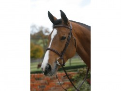 Mark Todd Palin Raised Cavesson Bridle