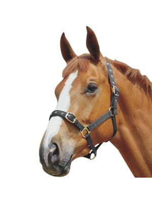 Weatherbeeta Roma Padded Jersey Head Collar Black