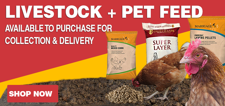 Purchase Livestock, Pet Feed, Chicken Feed, Dog Food, East Anglia, Suffolk, Norfolk